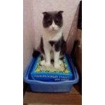 """Наполнитель для кошачьего туалета """"Любимый кот без хлопот"""" Одноразовый туалет для кошек фото"""