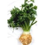 Овощи   Сельдерей фото