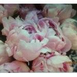 Дарить цветы- такое приятное занятие! Читать все отзывы 1 · Поликлиника №  83 (Большой проспект Петроградской стороны ... 27b26d49492