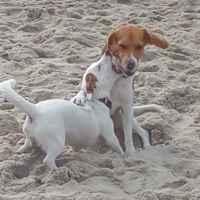 Корм для собак Nutram Sound Balanced Wellness Puppy фото