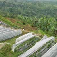 плантации клубники