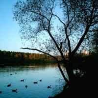 Парк в районе Покровское-Стрешнево