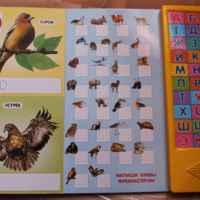 Говорящая живая азбука. Издательский Дом Азбукварик фото