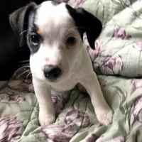 Фото от хозяина мамы-собаки