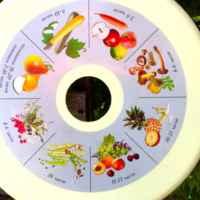 Электросушилка для овощей и фруктов Суховей М фото