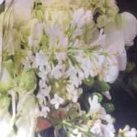 Фотошторы Белый букет компании Сирень фото