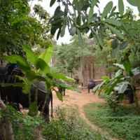 дорога в джунглях на слоновей ферме