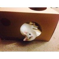 Домик для кошки PaperCat Cheeese  фото