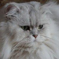 DashaCat аватар