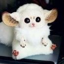 olya_lol аватар