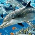 Дельфиненок аватар