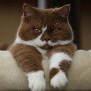 Choco_Cat аватар