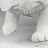 Smashing_cat аватар