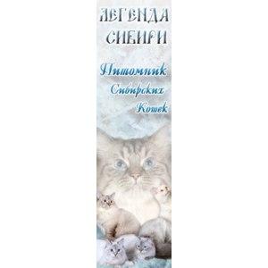 "Питомник сибирских кошек ""Легенда Сибири"", Санкт-Петербург фото"