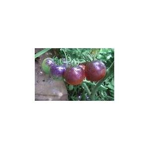 Фиолетовые томаты Violet Jasper фото