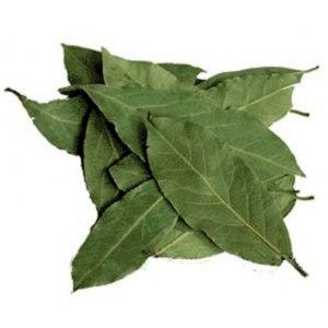 Лекарственные растения  Лавровый лист фото