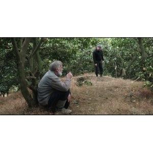 Мандарины (2013, фильм) фото