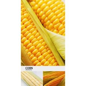 Овощи   кукуруза фото