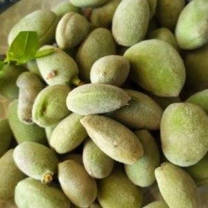 Орехи Природа Недозревший орех миндаля фото