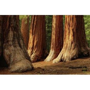 Национальный парк «Секвойя», США фото
