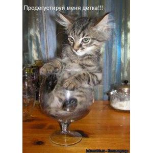 Котоматрица - фотографии животных с прикольными надписями / kotomatrix.ru фото