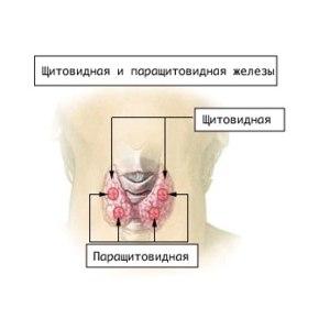 Гемитиреоидэктомия – удаление половины (одной доли) щитовидной железы. фото
