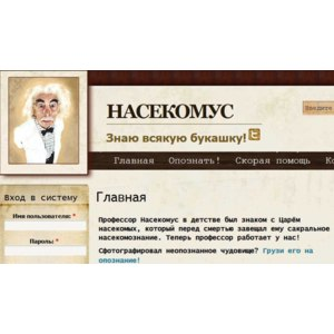 http://nasekomus.ru/ фото