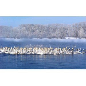 Лебединое озеро, Алтайский край фото