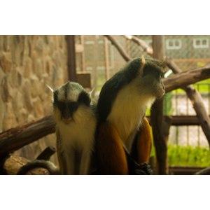 """Планета обезьян"" - новый зоопарк на Калужском шоссе., Москва фото"