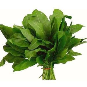 Зелень   Щавель фото