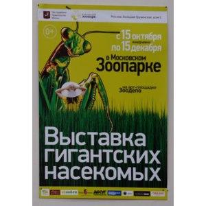Выставка гигантских насекомых в Московском Зоопарке, Москва фото