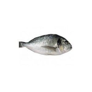 Рыба Свежая дорадо фото