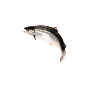 Рыба Лосось  фото