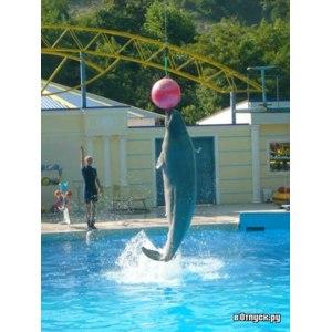 Дельфинарий при московском зоопарке, Москва фото