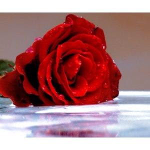 Гидролат СпивакЪ Розы фото