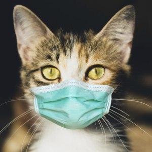 Услуги ветклиник  Анализ ПЦР на коронавирусный энтерит у животных (Feline coronavirus enteritis) фото