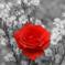 SURGUT8865 аватар