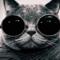 Котофейка42 аватар