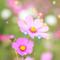 Sofiko_M аватар