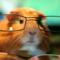 LemosHamster аватар