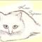 kisa_sapiens аватар
