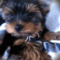 KatrishaKly аватар