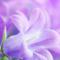 Anne15 аватар