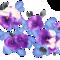 Цветочек по имени Анютины глазки аватар