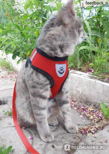Шлейка-жилет для кошек и мелких собак Aliexpress Cat Dog Adjustable Harness Vest Walking Lead Leash For Puppy Dogs Collar Polyester Mesh Harness For Small Medium Dog Cat Pet фото