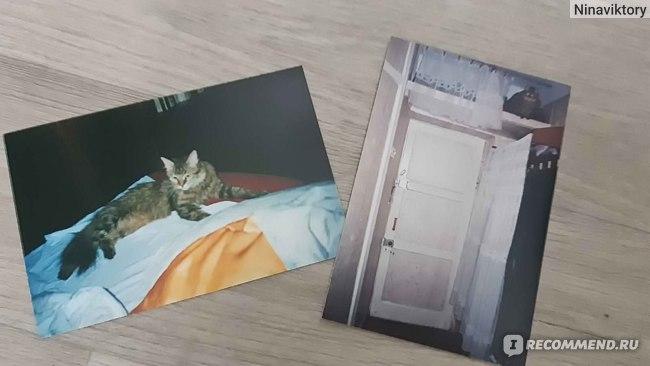 Кошки отзывы