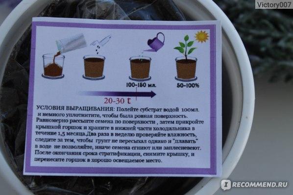 Rostokvisa. Набор для выращивания Лаванда фото