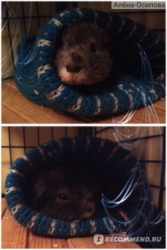 Пока в квартире прохладно, положила шапку, теперь самое любимо местечко, чуть что, сразу бежим туда;)