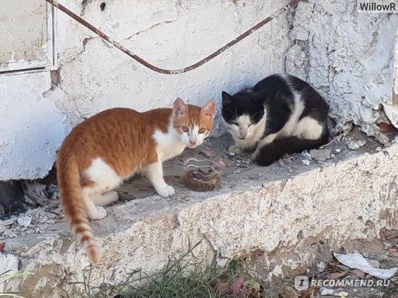 Кошки Хаммамета,кушают корм