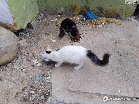 Корм для кошек Ownat classic Sterilized фото